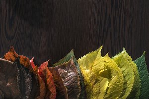Autumn leaves on dark background.