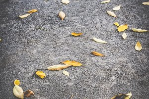 Autumn leaf on sidewalk