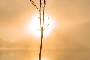 Tree, fog and the sun