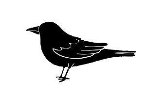 Black bird silhouette