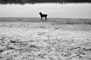 Black dog at the beach