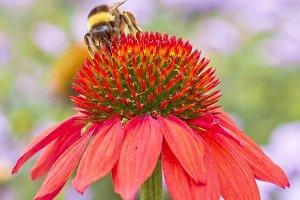 Bumble bee heaven