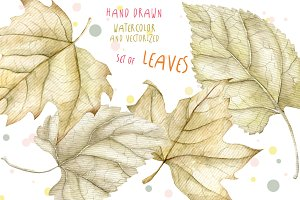 4 Watercolor leaves, hand drawn