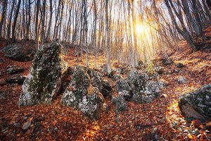 Autumn forest with stones at sunset