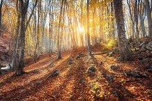 Autumn landscape. Forest at sunset
