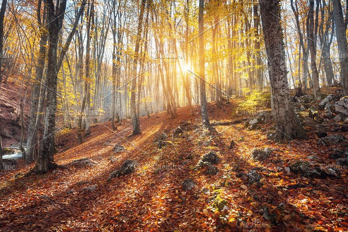 Autumn landscape. Forest at sunset - Nature