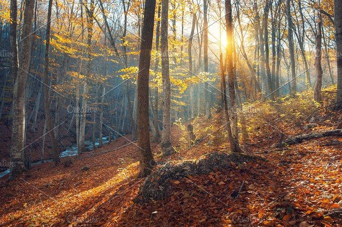 Autumn landscape. Forest at sunset - Nature