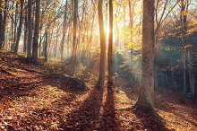 Autumn landscape. Forest at sunset