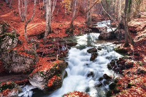 Autumn foret with mountain river