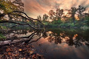 Autumn forest at the river in sunset