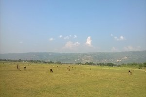 A field of haor area in Sunamganj