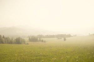 field fog landscape