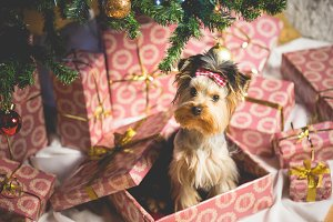 Cute Puppy as a Christmas Present