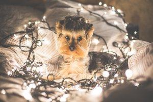 Cute Jessie in Christmas Lights