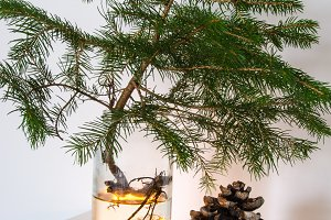 Small spruce and cobs as decoration