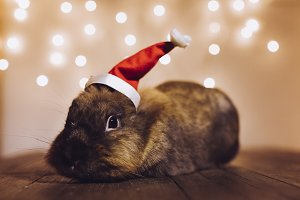 Portrait of a Rabbit at Christmas