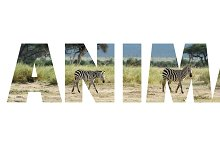 animal_w_1.jpg