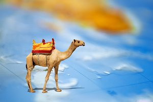 Camel standing on a map