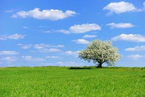 landscape&#x3B; green&#x3B; grass&#x3B; sky&#x3B; nature