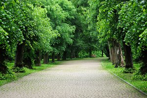 Green alley with trees in the summer
