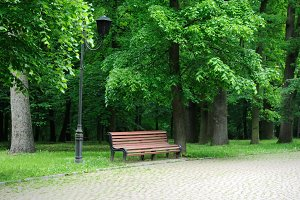 Bench in the sunmmer park
