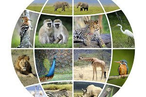 Globe design with photographs animal
