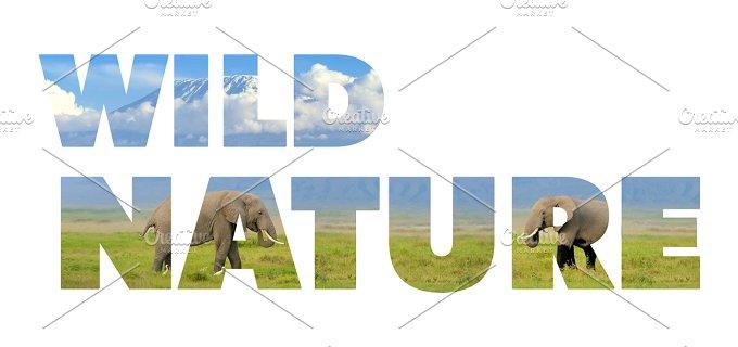 wild_nature_w_2.jpg - Photos