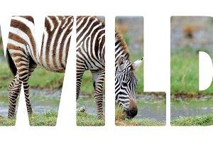 wild_w_1.jpg