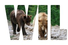 "Background with word ""Wild"". Letters"