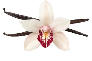 Vanilla pods and orchid flower head