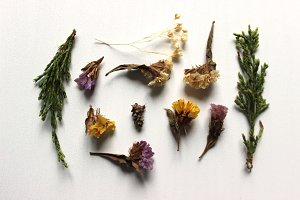 Dried Flowers 3