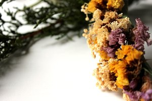 Dried Flowers 4