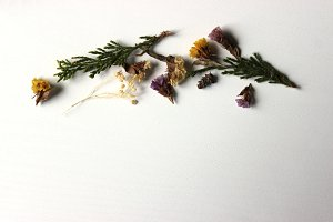 Dried Flowers 5