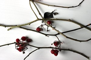 Twig + Berries