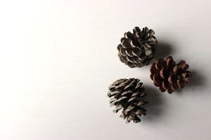Pine Cones on White 1