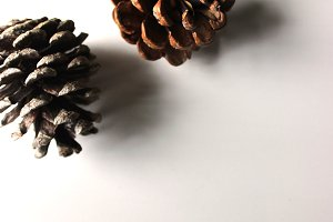 Pine Cones on White 2