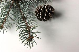 Pine Trees & Pine Cones 3