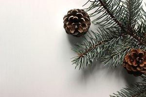 Pine Trees & Pine Cones 4