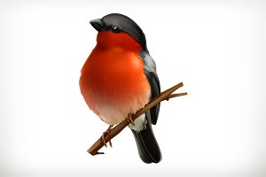 Bullfinch vector icon