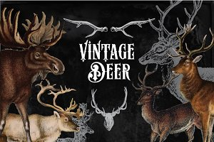 31 Vintage Deer Clipart & Brushes