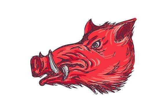 Wild Boar Razorback Head Side Drawin Illustrations
