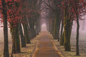 Mystic forest path in autumn