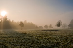 Mystic morning in the fields