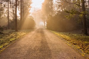 Autumn path in the early morning