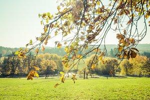 sunny autumn landscape tree