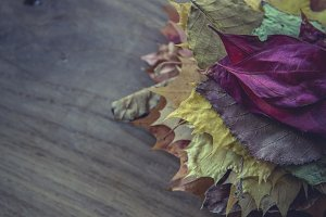 stack of colorful autumn leaves