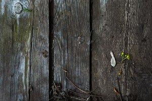 Wood plank background - Stock image