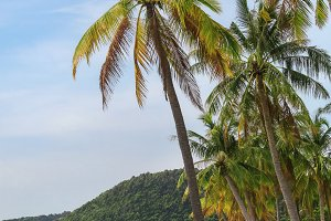 tropical beach with high palms
