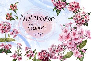 Watercolor flowers set (Phlox)