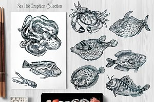 Sea Life Graphics Collections